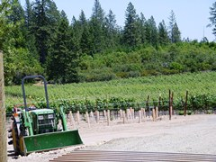 W.H. Smith Wines Howell Mountain vineyard is ringed by forest - Click for larger image (http://jamesmcgillis.com)