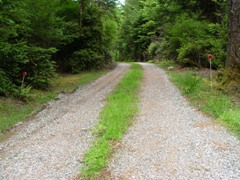 Beautiful new grass and gravel driveway, Port Orford, Oregon home for sale - Click for larger image (http://jamesmcgillis.com)