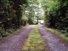 Beautiful, long, secluded driveway, Port Orford, Oregon forest home for sale - Click for larger image (http://jamesmcgillis.com)