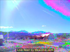 During the torus energy-flow event, virtual wildflowers bloomed at the Ranchettes at Moab Ranch - Click for larger image.