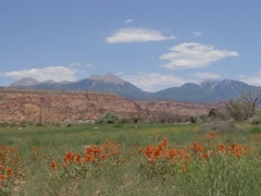 The view from Moab Ranch toward the La Sal Range, Moab, Utah - Click for larger image (http://moabranch.com)