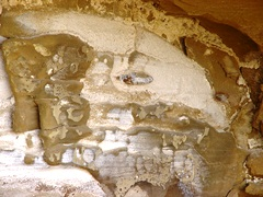 Image of an ancient warrior occurring in a natural sandstone seep at Gallo Campground, Chaco Canyon, NM - Click for larger image (http://jamesmcgillis.com)