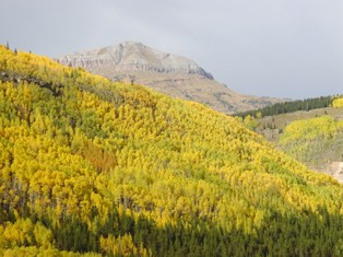 Aspen trees changing to fall color, Silverton, Colorado - Click for larger image (http://jamesmcgillis.com)