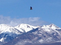 A large bird of prey seems to glide along the peaks of the La Sal Range at Moab, Utah - Click for larger image (http://jamesmcgillis.com)