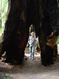 The Author, Jim McGillis at Jedediah Smith Redwood State Park (http://jamesmcgillis.com)