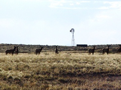 Seven members of the Kin Klizhin elk herd stand watch in front of Windmill Hill - Click for larger image (https://jamesmcgillis.com)