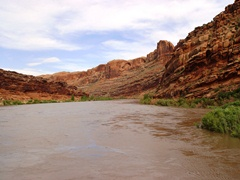 Colorado River nears flood stage upstream from Moab, Utah in June 2011 - Click for larger image (http://jamesmcgillis.com)
