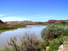 Colorado River flooding - A view upstream past dying tamarisk toward the Moab Pile, with the Matheson Wetlands to the right - Click for larger image (http://jamesmcgillis.com)