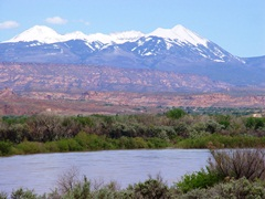 Colorado River water intrudes into the Matheson Wetlands on the far riverbank; with late May 2011 snowpack on the La Sal Range in the background - Click for larger image (http://jamesmcgillis.com)