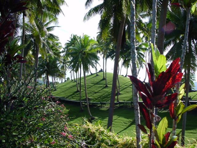 Coconut palms dot the landscape at Lomalagi Resort, Vanua Levu, Fiji Islands - Click for larger image (https://jamesmcgillis.com)
