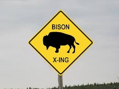 """Bison X-ing"" signs will not flourish if the U.S. builds a 700-mile long wall at the Mexican Border - Click for larger image (http://jamesmcgillis.com)"
