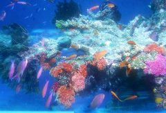 Tropical fish and coral make a colorful display in the upper reaches of Natewa Bay, Vanua Levu, Fiji Islands - Click for larger image  (http://jamesmcgillis.com)