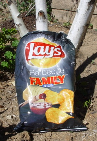 Discarded Lays Family-Size Barbecue Potato Chip bag (http://jamesmcgillis.com)