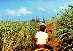 Riding through the sugarcane fields of Kauai, Hawaii in 1988 - Click for larger image (https://jamesmcgillis.com)