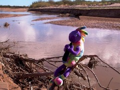 Plush Kokopelli sits by the waning flow of the Little Colorado River in May 2013 - Click for larger image (http://jamesmcgillis.com)