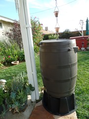 After a December rain, both of our fifty-gallon rain barrels were full to the brim - Click for larger image (http://jamesmcgfillis.com)