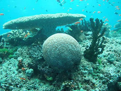 """Table and Ball"" coral formation, Namena Reef, Fiji Islands - Click for larger image (http://jamesmcgillis.com)"