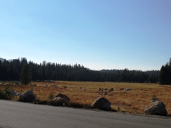Tuolumne Meadow in summer 2016, devastated by ten years of drought - Click for a greener image in late June 2017 (http://jamesmcgillis.com)