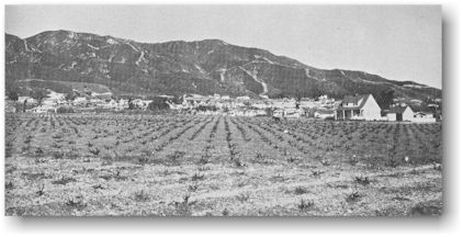 Wine Grape Vineyard, Burbank, California, Early 20th Century (http://jamesmcgillis.com)